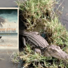 Novel set in the Florida Keys (A Storm is coming..)
