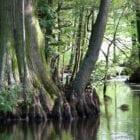 Talking Location with author Idabel Allen – Tennessee Delta