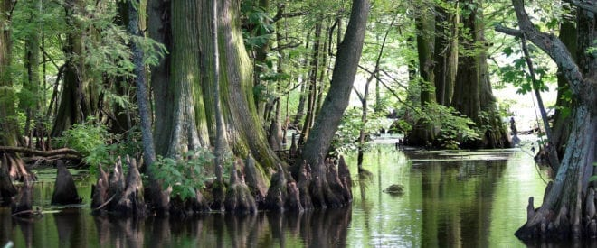 Reelfoot_lake