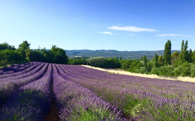 Win a 'Cycling for Softies' holiday in Provence! Blog