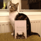 Five Great Books set in JAPAN with cats at their heart