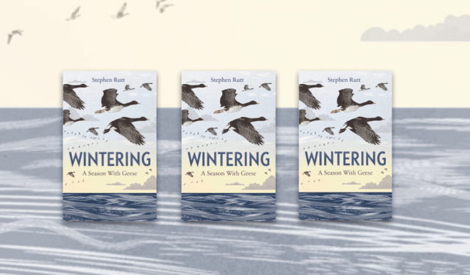 3 copies of WINTERING: A SEASON WITH GEESE